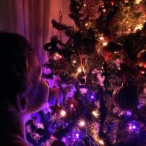 Silas admiring the tree